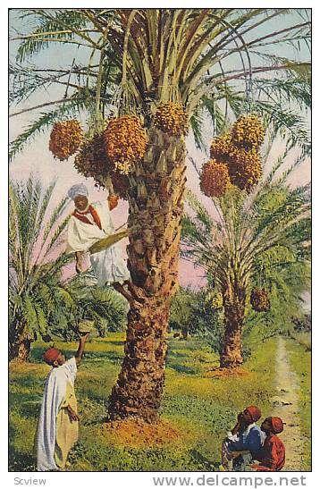 BouSaada Algérie