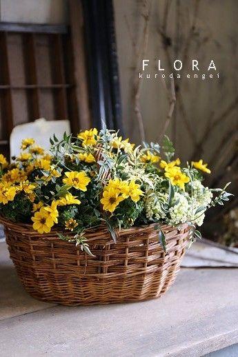 フローラのガーデニング・園芸作業日記-ビデンス ハゴロモジャスミン 寄せ植え