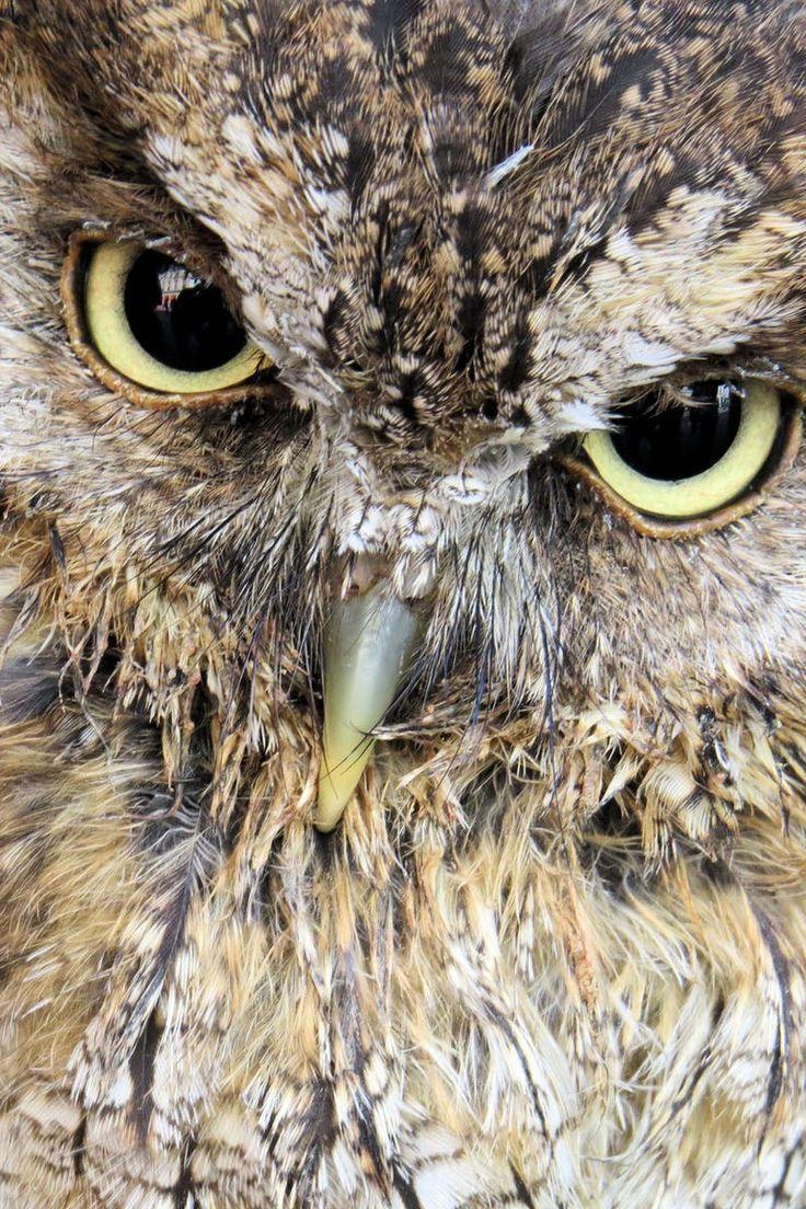 Photo by John Foehner. Discover more free photos from John: https://www.pexels.com/u/john-foehner-248409/ #bird #animal #beak
