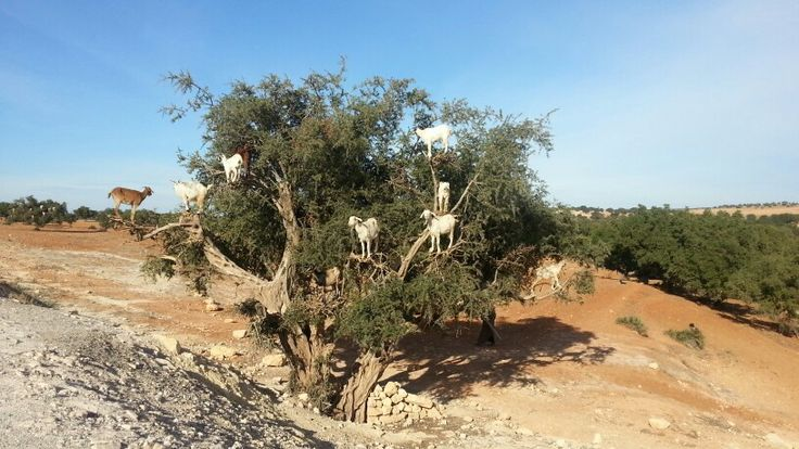 Aragne tree