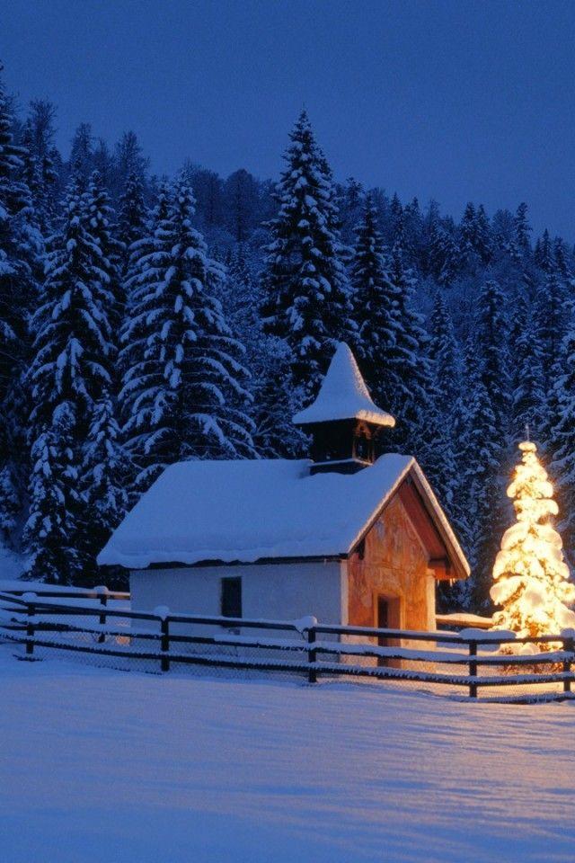 Christmas tree, Bavaria, Germany