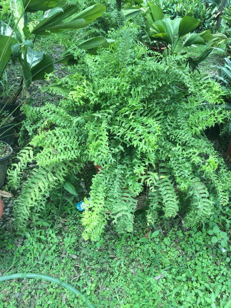 617 mejores im genes sobre flores plantas y sus nombres for Plantas y jardines