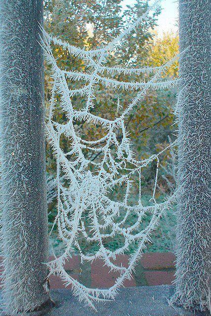 Frozen spiderweb