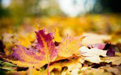 Letölthető őszi papírok