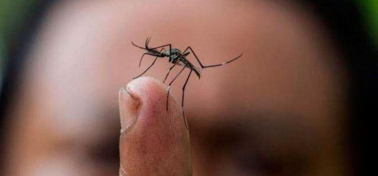 Puntarenas concentra 46% de casos de Zika, pero hay más preocupaciones