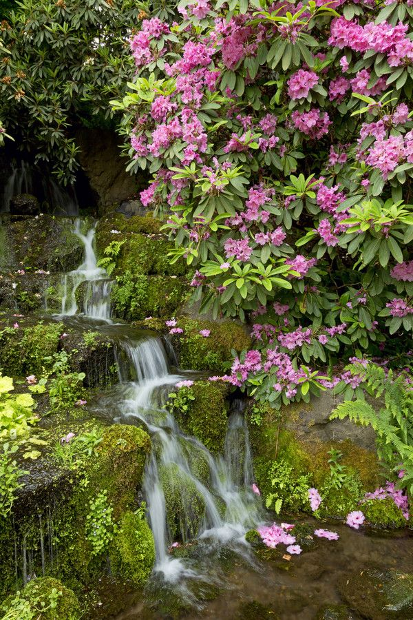 10 best images about spring in oregon on pinterest gardens cherry blossoms and blossoms for Crystal springs rhododendron garden