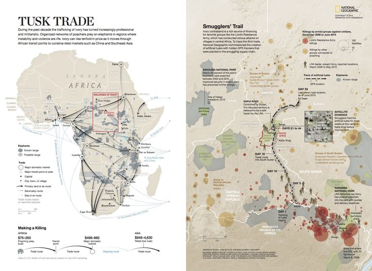 "In the September 2015 issue of National Geographic, journalist Bryan Christy's story, ""Tracking Ivory,"" began with a brilliant idea: Design artificial elephant tusks, complete with GPS devices, and monitor where they travel. via @natgeo"