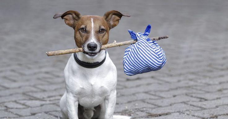 MIT TEGYEK? KIT HÍVJAK? KIÉ LEHET? VAN GAZDÁJA? HOVA TEGYEM? Ezek azok a kérdések, amik elsőkként felmerülnek bennünk, amikor egy gazdátlan kutyát találunk. Az alábbiak ebben nyújthatnak segítséget: