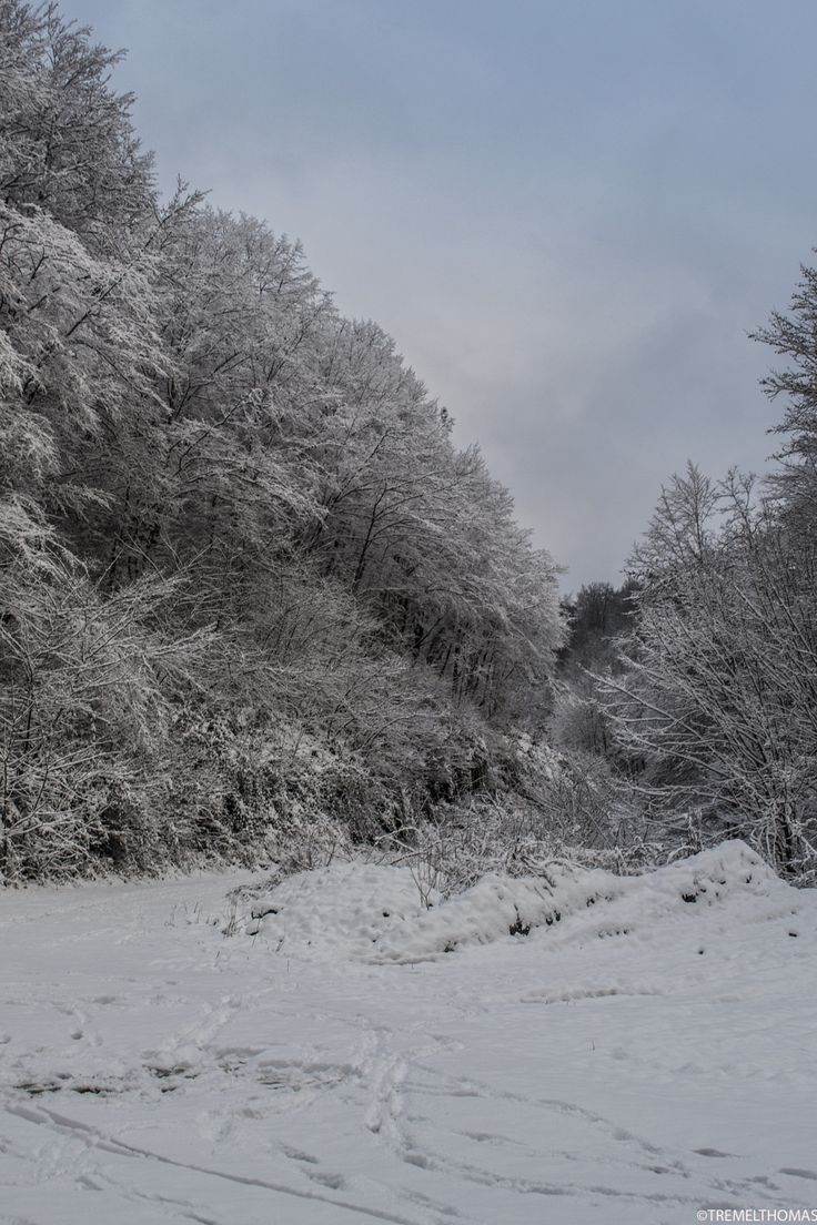 winter by tremmel thomas on 500px