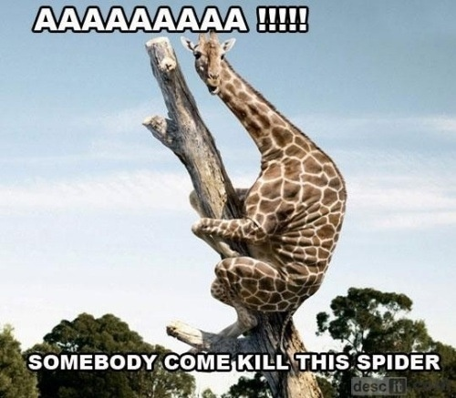 Animal Pics, Animal Pictures, Spiders, June Bugs, Hilarious Animal, Friday Funny, Lol Pics, Animal Photos, Giraffes