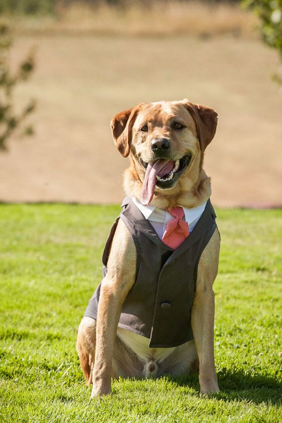Dog Tuxedo  custom sizing  Charcoal by ArlaDesigns on Etsy, $198.00