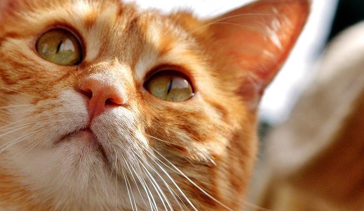 Pořizujeme si kočku: Jak začít? Dobře si to rozmyslete…