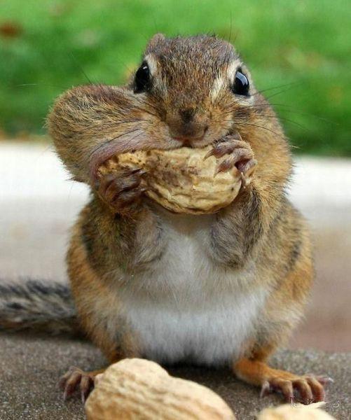 It won't fit! squirrel