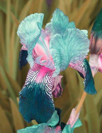 신성한 꽃보리수화(菩提花),보리수나무 꽃/http://blog.daum.net/vacancy33/5535 세상에서 가장 아름다운 극락조화/http://blog.daum.net/vacancy33/5458 희귀한 장미꽃/http: