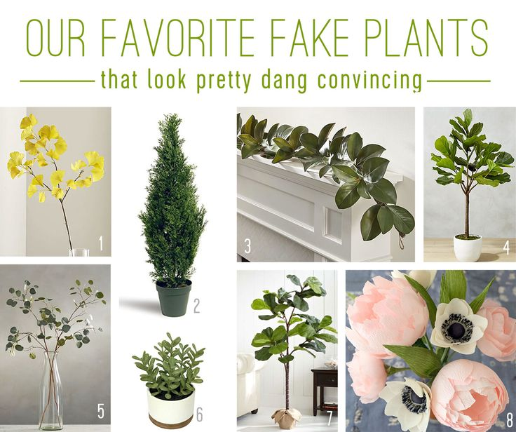 #68: There's No Shame In The Fake Plant Game | Young House Love