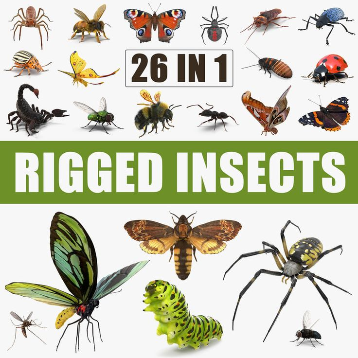 3D model Insects Big Rigged Collection
