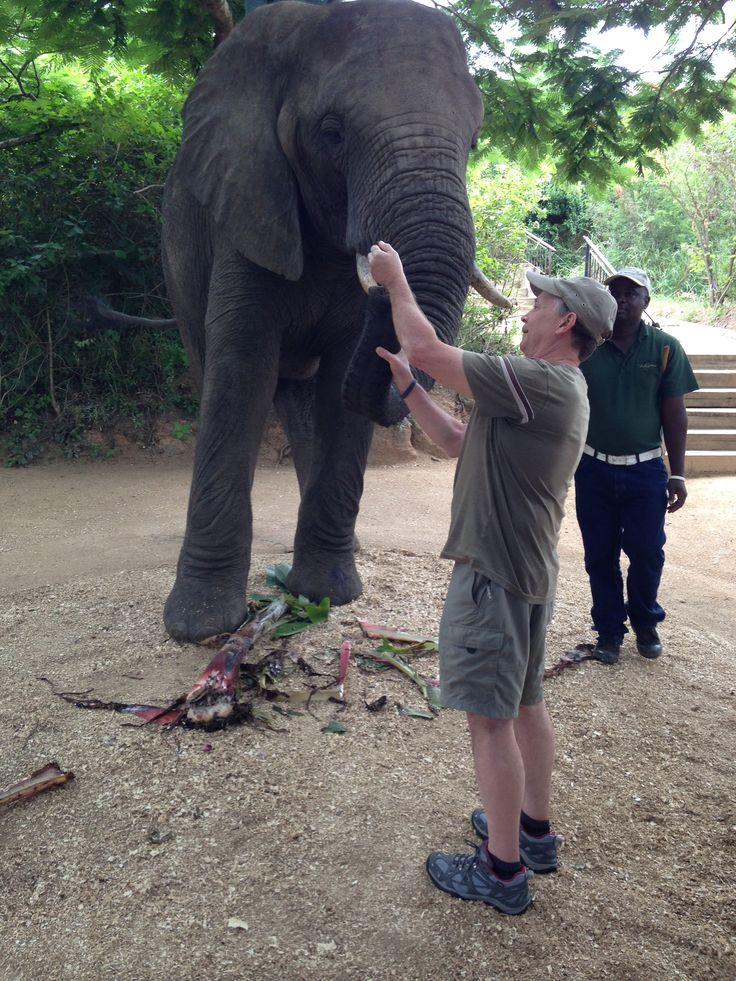 Dick our professional photographer / tour leader from Capture Africa Tours busy feeding the elephants.