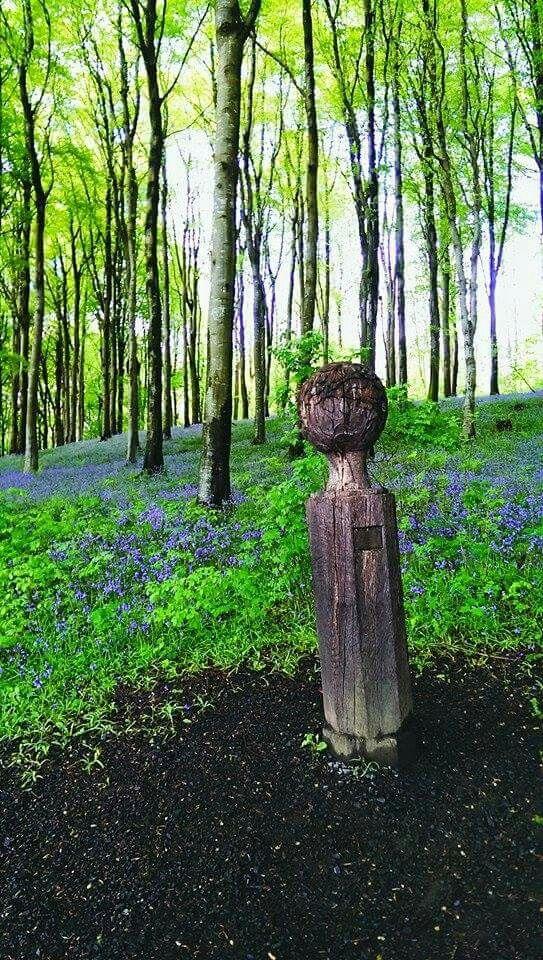 Portglenone forest, Northern Ireland. My own. #inkedandtwisted