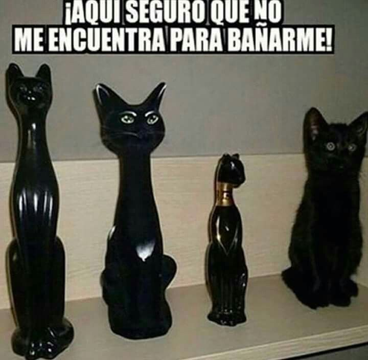 Image result for animales con frases chistosas