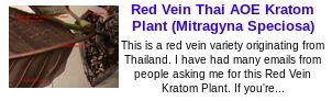 Red Vein Thai AOE Kratom Plant (Mitragyna Speciosa)