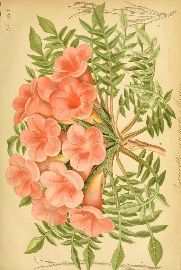 Spectacular Gartenflora zeitschrift f r garten und blumen