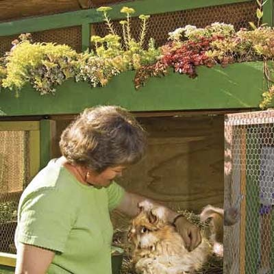 green-roofed rabbit hutch shown here. The alfalfa hay bedding and droppings of the fluffy Angora rabbit brothers, Peaches and Mocha, are collected for fertilizer, and Carlson gathers and spins their fur into yarn. The hutch's sedum-covered roof absorbs rainwater.
