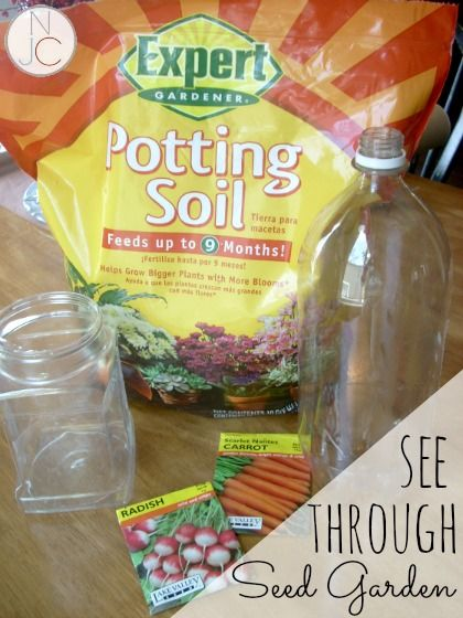 Build a see-through seed garden!  What a great way to watch what goes on beneath the soil!