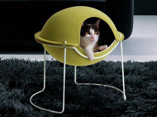 satisfy your cat's nesting instinct