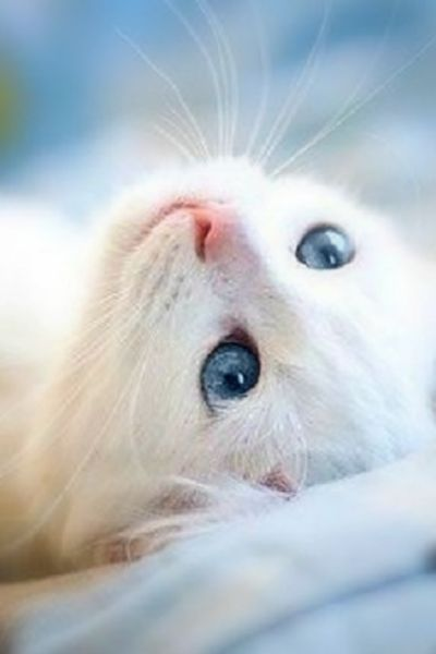 ❢white kitty on soft blue