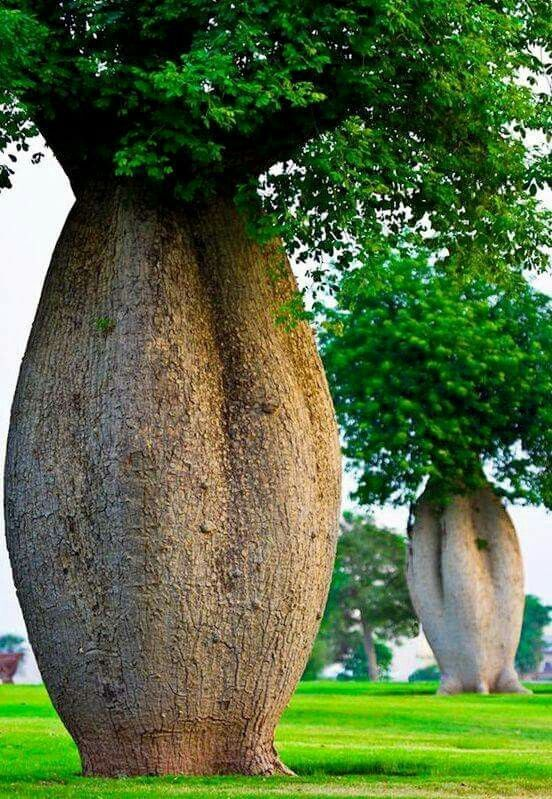 Incredible Trees