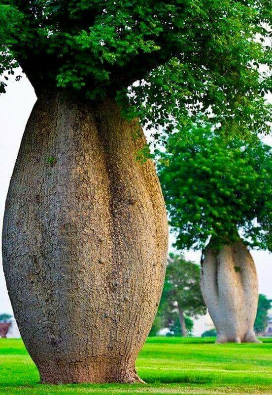Incredible Trees