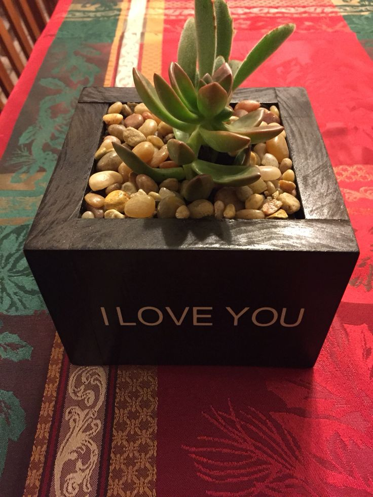 Custom made succulent boxes $35 with any logo