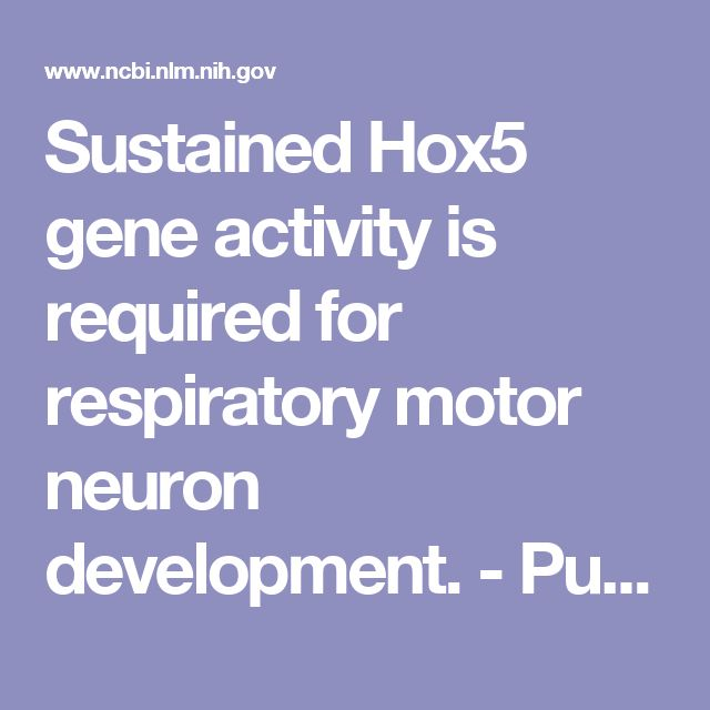 Sustained Hox5 gene activity is required for respiratory motor neuron development.  - PubMed - NCBI