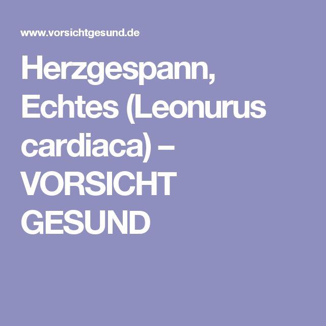Herzgespann, Echtes (Leonurus cardiaca) – VORSICHT GESUND
