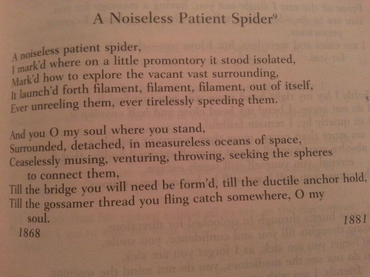 a noiseless patient spider A noiseless patient spider by walt whitman a noiseless patient spider i markd where on a little promontory it stood isolated markd how to explore the vacant vast surrounding it launchd.