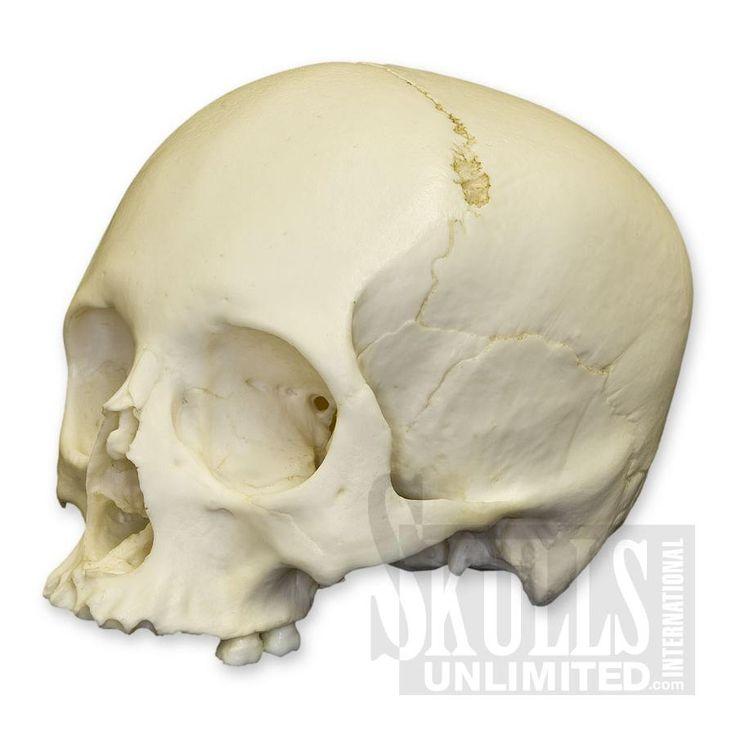 human skull profile - Google Search