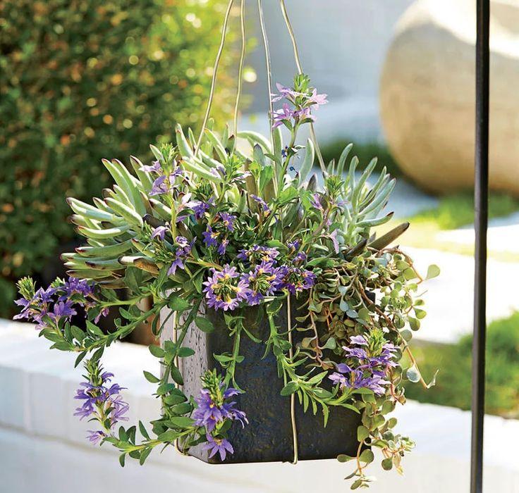 blaue Fächerblume Sukkulenten Sommer hängende Blumentopf Fiberglas