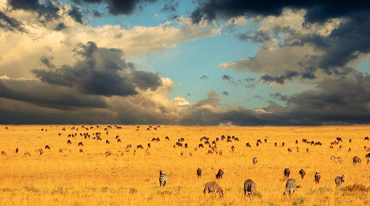 The Serengeti National Park in Tanzania was created in 1952. The Serengeti National Park is home to one of the most magnificent wildlife spectacles on planet Earth. This spectacle being the great migration of wildebeest and zebra across the plains.