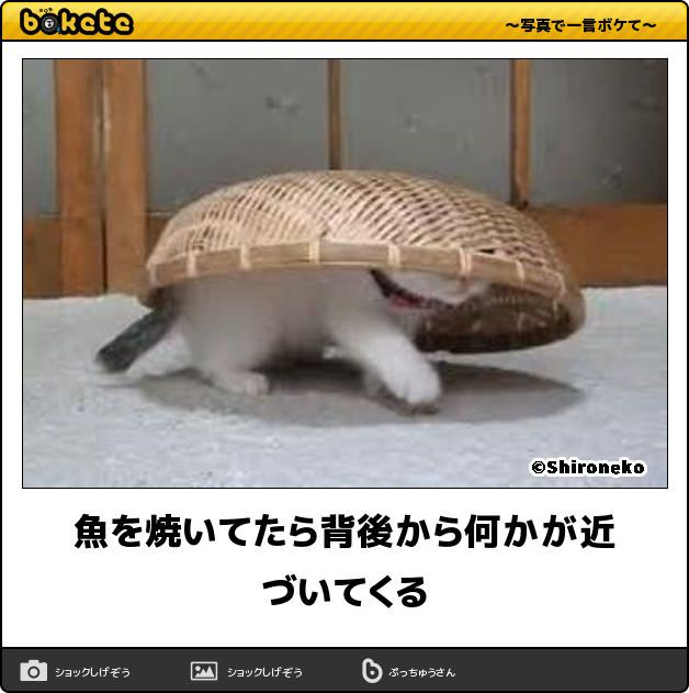【吹いたら負け】3秒で笑う猫の傑作ボケて16選