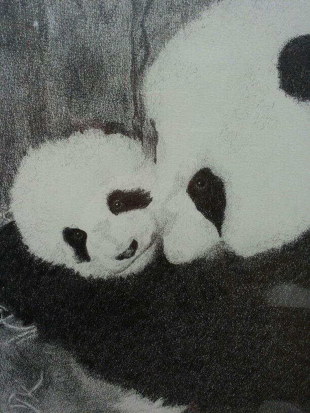 Panda met jong,30x40, grafietpotlood