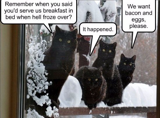 529 best cats images on pinterest funny animals cats humor and because of the super bowl or the election sciox Image collections