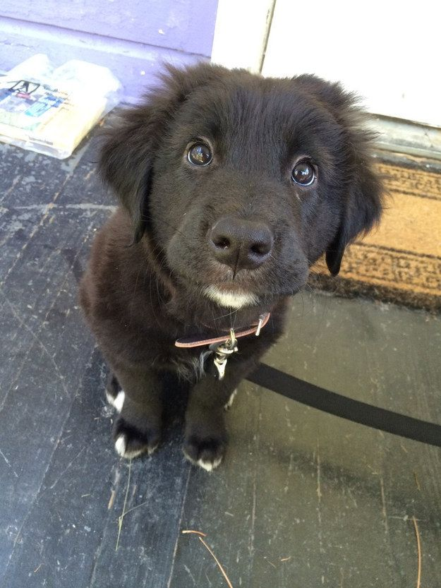 These puppy dog eyes deserve every snackie the world has to offer. EVERY. SINGLE. ONE. | 27 Puppies Who Are Too Cute To Be Real