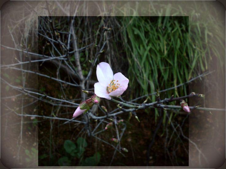 www.veronicafleur.tumblr.com