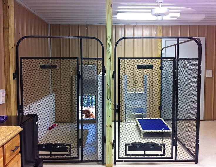 inside multiple dog cages