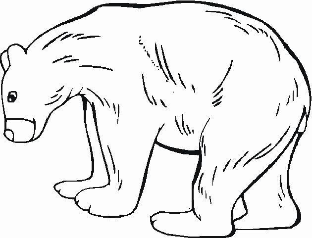 Dibujos Para Colorear De Animales Del Bosque Dibujos Para Colorear De Animales Del Bosque In 2020 Animal Coloring Pages Woodland Animals Forest Animals