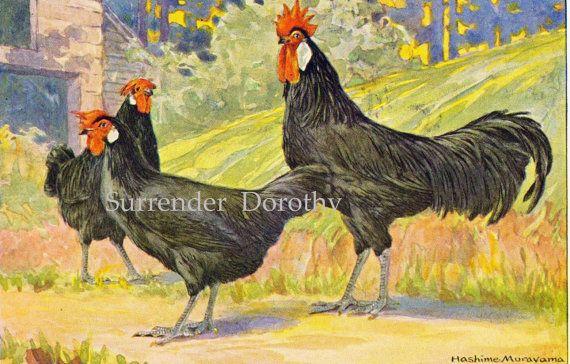 Chickens Black Minorca, Gallus Bankiva & Yokohama by Hashime Murayama 1920s Poultry Livestock Lithograph Print