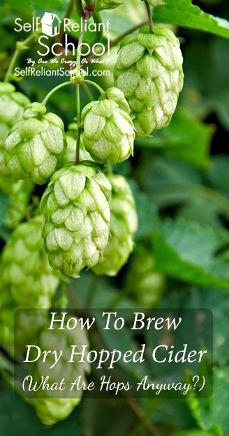 How to brew a dry hopped cider - plus we talk about the varieties and forms of hops. #beselfreliant