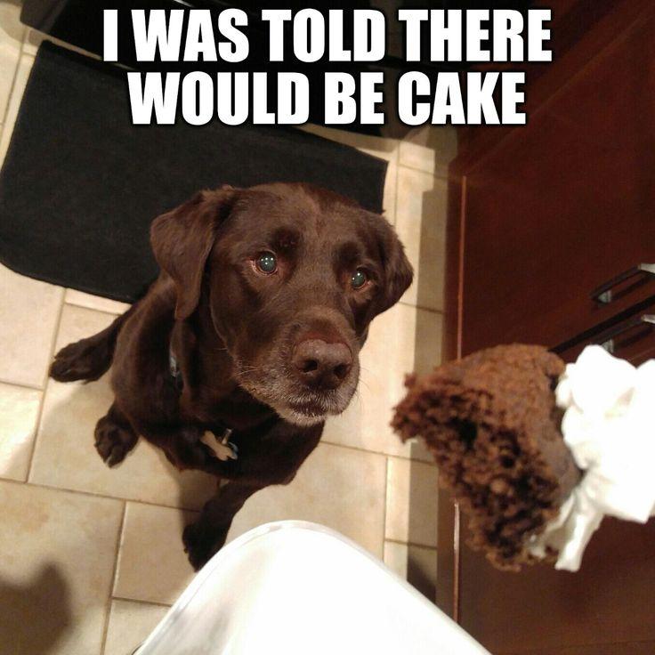 I love cake!