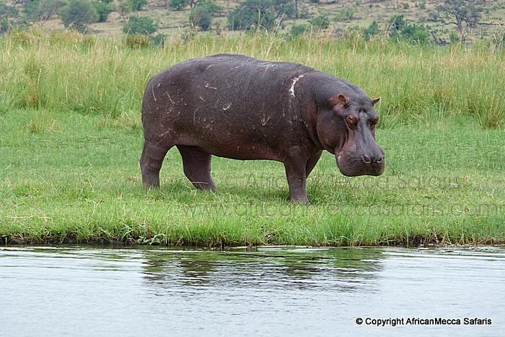 Zambezi Queen Safari Chobe - Chobe Safaris - Picasa Web Albums