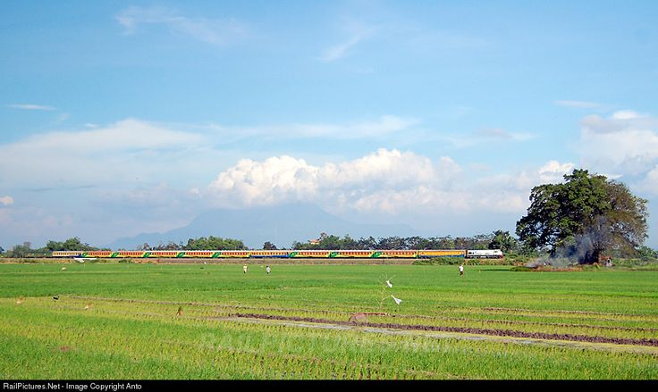 Economy class trainset of Gaya Baru Malam Selatan was passing the ricefield on its trip to Jakarta city.